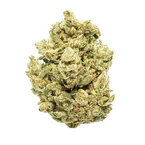 GG4 strain